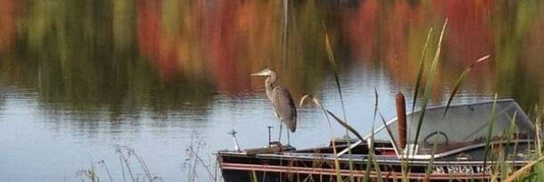 Heron on Boat on Silver Lake